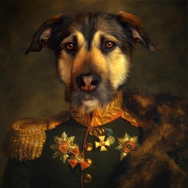 hunde_portraits