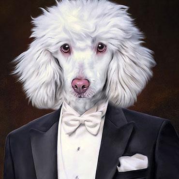 Hunde in Kleidung, weisser Pudel, Königspudel