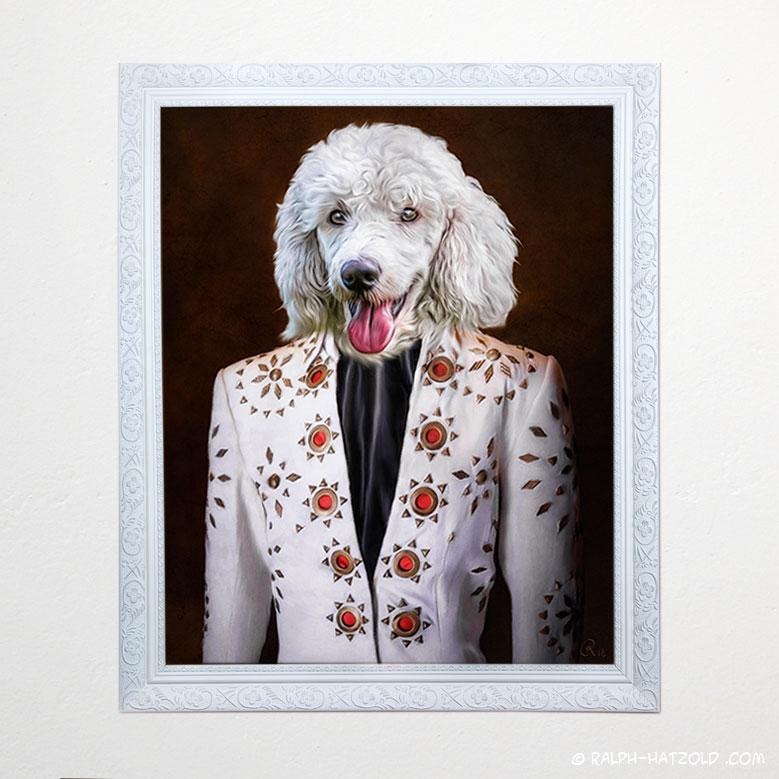 Hunde in Kleidung, weisser Pudel, Elvis, Königspudel
