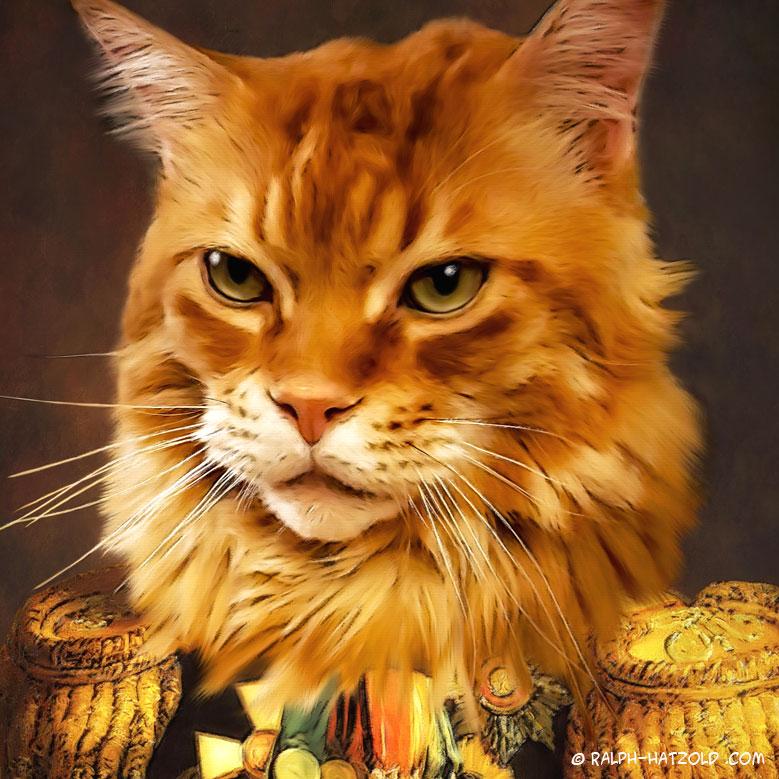 Katzenportraits, Maine coon Kater Filou, Katze in Kleidung Tierkleidung, Tierportraits in Kleidung