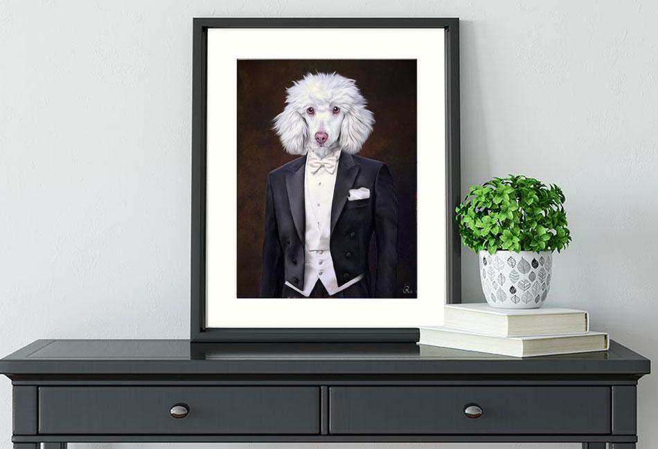 Pudel im Anzug, Hunde in Kleidung, weisser Pudel, Königspudel