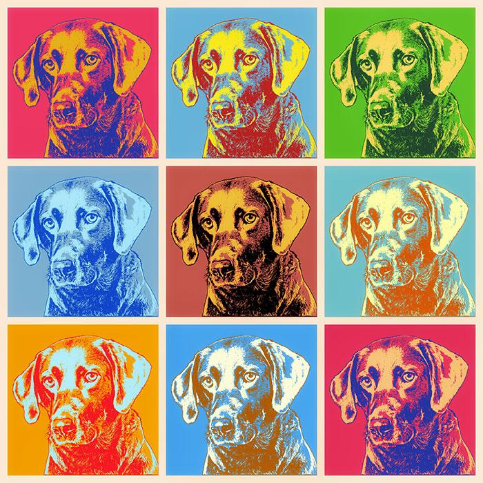 Hundeportrait Labrador Pop Art Bilder vom eigen Hund Pop Art Andy Warhol Stil