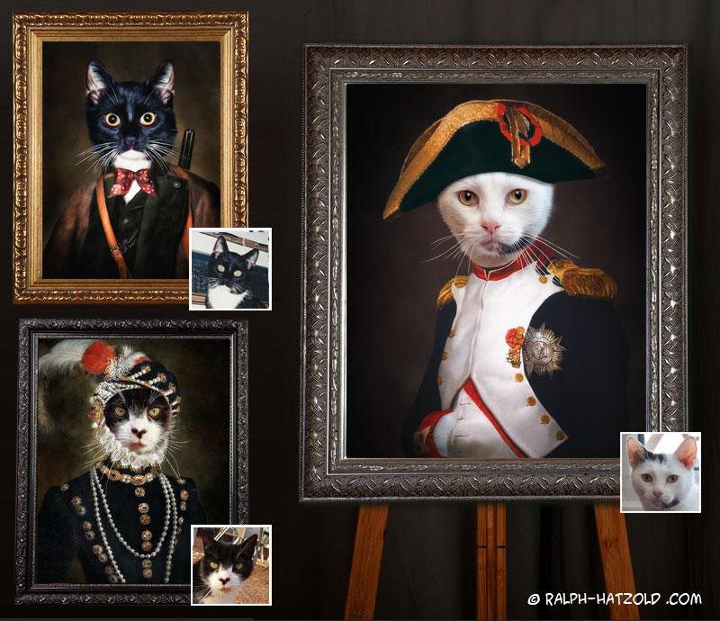 katzenportrait in Kleidung, gemälde Katze in Uniform, Katze Napoleon, Katz im Kleid