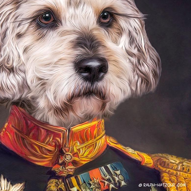 Frodo Hundeportrait in Kleidung