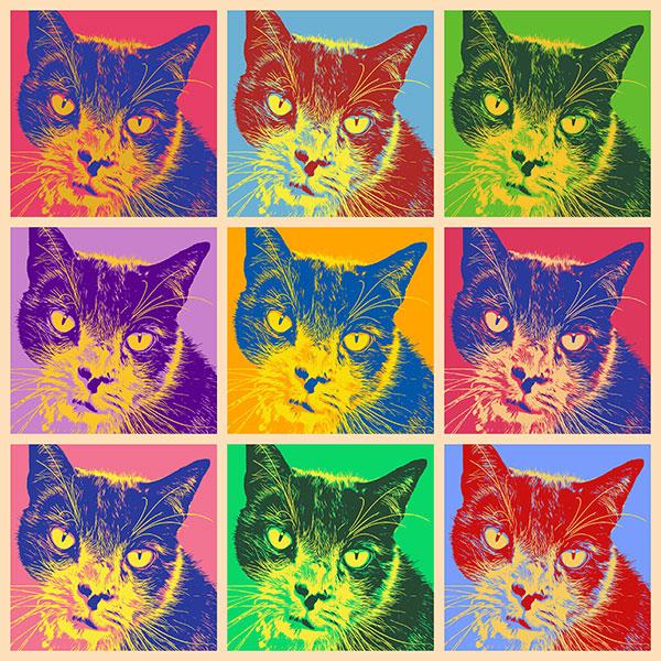 Katzen Pop Art Katzenbilder bunte Katzenbilder