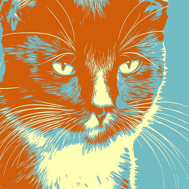 Foto Pop Art Katzenbilder Katzenporträts