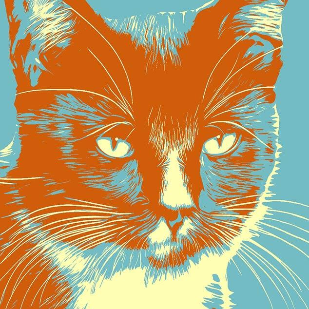 Katzenbilder bunte Kunst