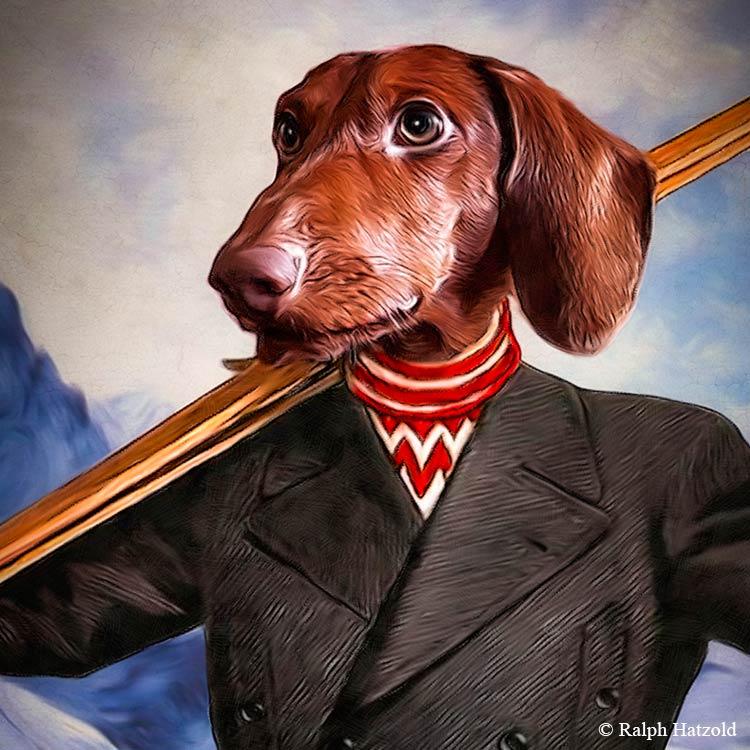 Dackelportrait Dachshund Skifahrer Skidog