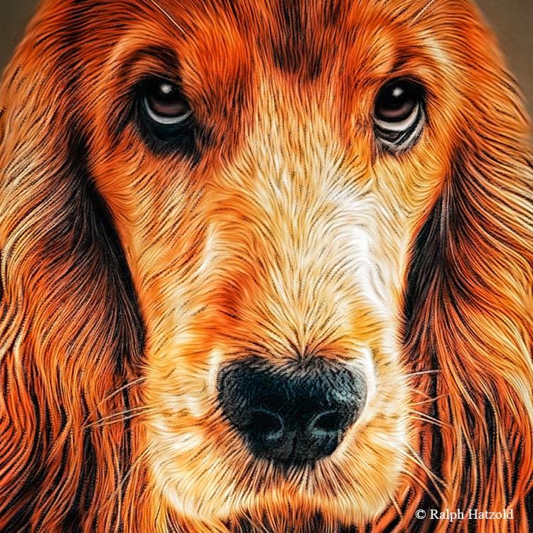 Cocker Spaniel als Ritter Gemälde Barockrahmen Bild kaufen, Geschenkidee Cocker Spaniel Hundeportrait vom eigenen Hund